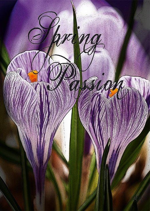 Spring Passion, postkort fra Inda Art som er en del af Seasons Collection med fire postkort inspireret af hver af de fire årstider