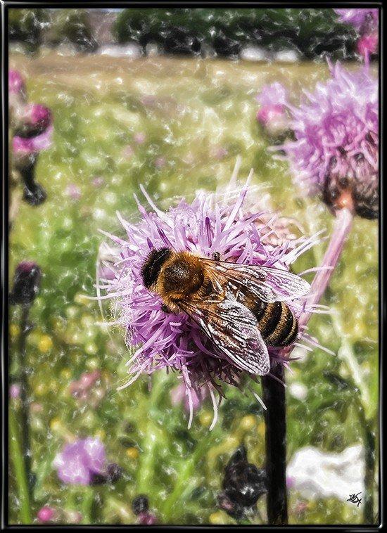 Natur plakat med sommerens honningbi på arbejde