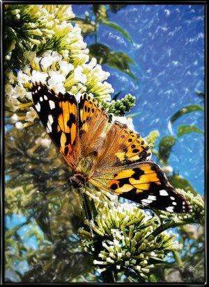 Naturplakat med orange sommerfugl