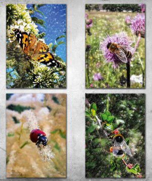 Livet i haven, postkort fra Inda Art