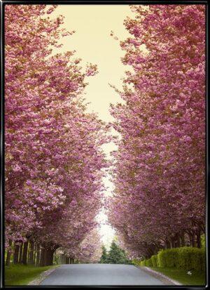 Japanske kirsebærtræer, plakat fra Inda Art